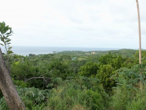 Die grüne Seite Roatáns