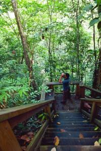 Nationalpark Pico Bonito, Honduras.© Instituto Hondureño de Turismo