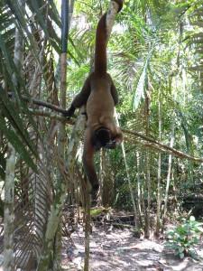In der Affenaufzuchtsstation von Sara Beneth